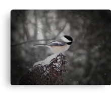 Chickadee In Snow Canvas Print