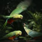 King Parrots Feeding by David Mapletoft