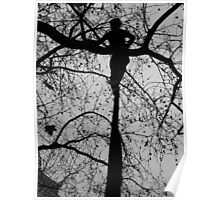 Tree Nymph. Hamburg. Germany Poster