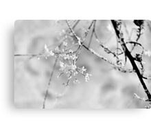 Frosted Star Canvas Print