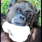 Sock Monkey by Mel Collins