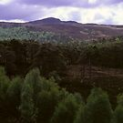 Caledonian Forest, Glen Affric by PigleT