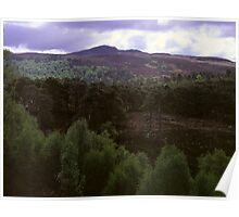 Caledonian Forest, Glen Affric Poster