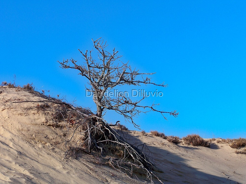 Bare in the Dunes by Dandelion Dilluvio