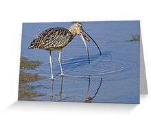 Long Billed Curlew Greeting Card