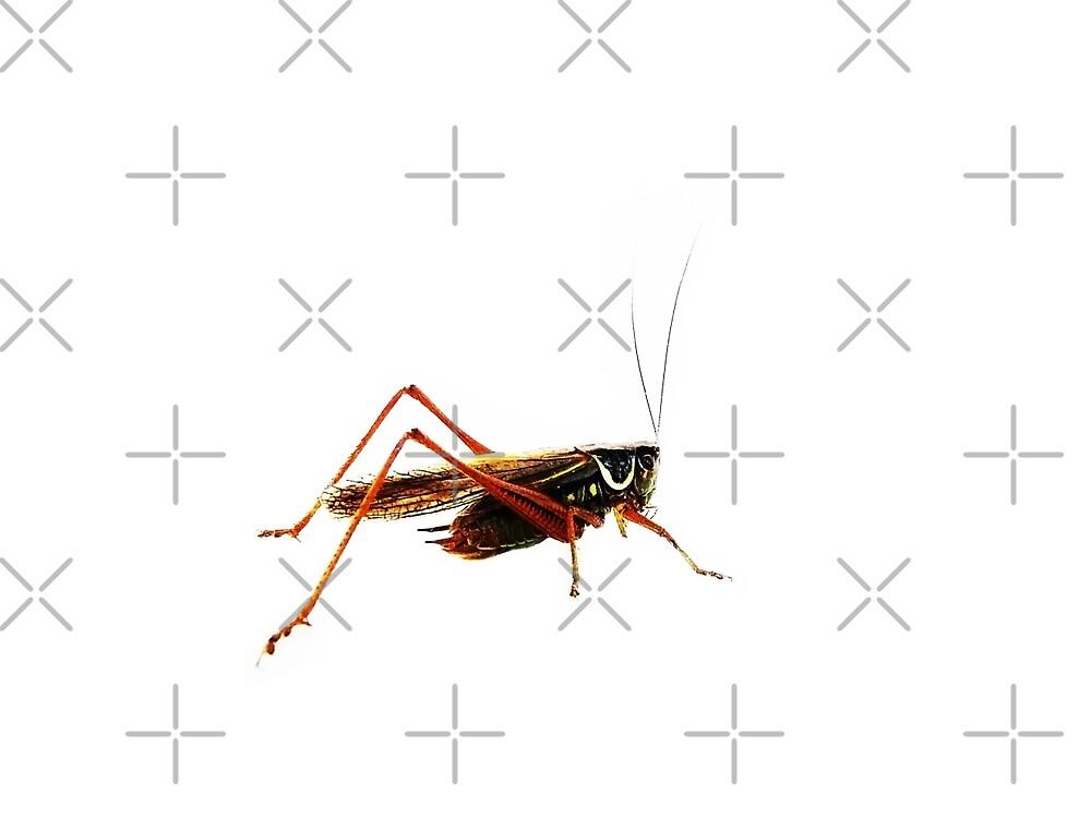Grasshopper (White Background) by Denise Abé