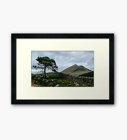A Tree, On The Rocks Framed Print
