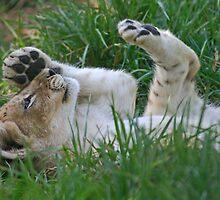 Just Lion Around by Mark Hamilton