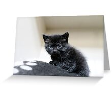 Small but purrfectly formed Greeting Card