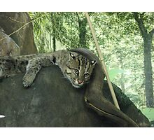zoo cat Photographic Print