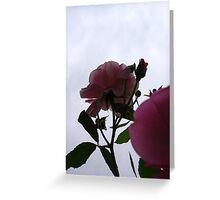 Bottom-up rose Greeting Card