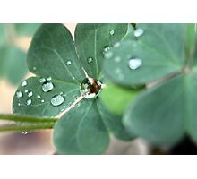 Clover Drops Photographic Print