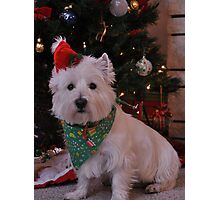 duncan waiting for santa Photographic Print