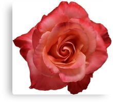 Ombré Red Garden Rose III - Hipster/Pretty/Trendy Flowers Canvas Print