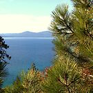 """""""Lake Pine"""" by Lynn Bawden"""