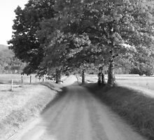 old country lane by jack robinson