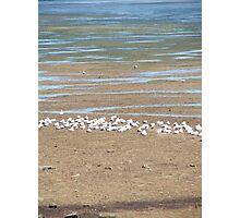 Seagull City Photographic Print