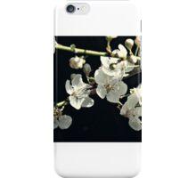snow white cherry blossums iPhone Case/Skin