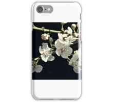 snow white cherry blossums iPhone Case/Skin