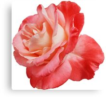 Ombré Red Rose II - Hipster/Pretty/Trendy Flowers Canvas Print
