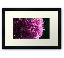A Purple Flower  Framed Print