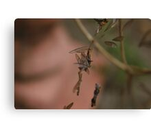 Bug Wings caught in Web Canvas Print