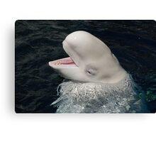 EyeShadow Beluga  Canvas Print