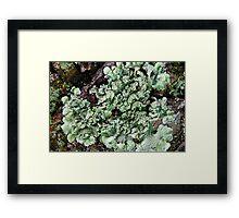 Leafy Greens Framed Print