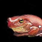 Red Frog by Steve  Woodman