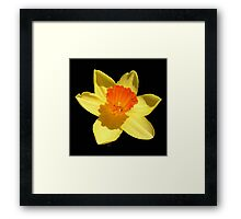 Negative Space Narcissi Framed Print