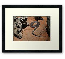 Black snake, Australia Framed Print