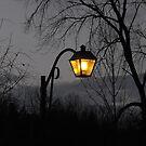 Light My Way by Tracy Wazny