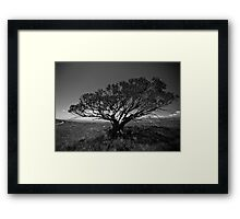Tree on Mt Stirling, near Mansfield, Victoria. Framed Print