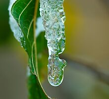 Icicle leaf by evilcat