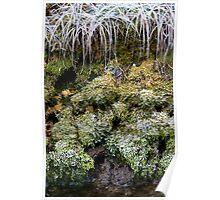 Frozen World - Moss Poster