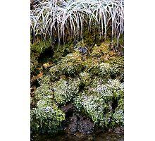 Frozen World - Moss Photographic Print