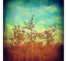Turquoise sky and trees Photographic Print