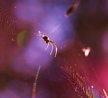 spider on a purple web by mariette sardin