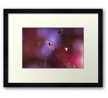 spider on a purple web Framed Print