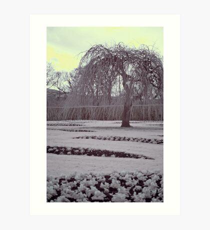 Infrared winter willow, Edinburgh Art Print