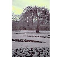 Infrared winter willow, Edinburgh Photographic Print