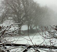 Winter Walk by jcjimages