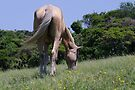 Mkulu Kei Horse Trails in Morgans Bay South Africa by Brian Edworthy