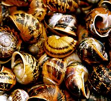 Dead snail shells by Richard Pitman