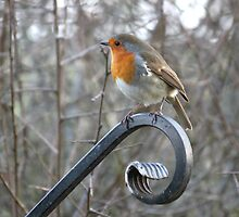 Picturesque Robin by Catherine Brookes