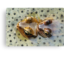 Frogs mating Canvas Print