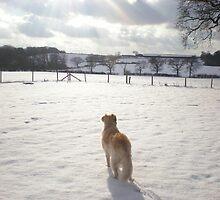 Snow scene by Catherine Brookes