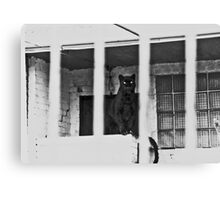 Unhappy Panther 1976 Canvas Print
