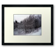Delicate Winter Beauty Framed Print