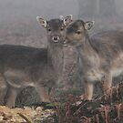 Misty Eyed Doe by Paul Gibbons